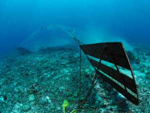 Bottom trawling - dragging nets across the sea floor to scoop up fish - stirs up the sediment and communities lying on the seabed. Wiping out everything in their paths, including corals and sponges that have flourished for thousands of years. Photo: ABC News
