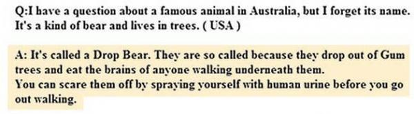 Koala-Bear-Stupid-Question-Australia-Answers-Drop-Bear-Tourism-Board