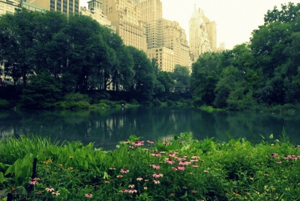 Photograph-Travel-NYC-Central-Park-New-York-City-USA