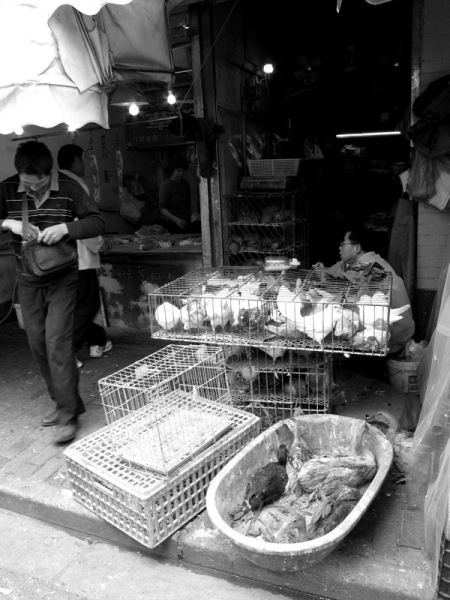 Shanghai-China-Photograph-Street-Market-Poultry-Chicken