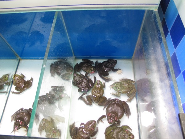 Shanghai-China-Travel-Photograph-Food-Live-Turtles