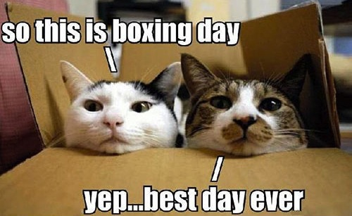 funny-cat-kitten-boxing-day-shopping-sales