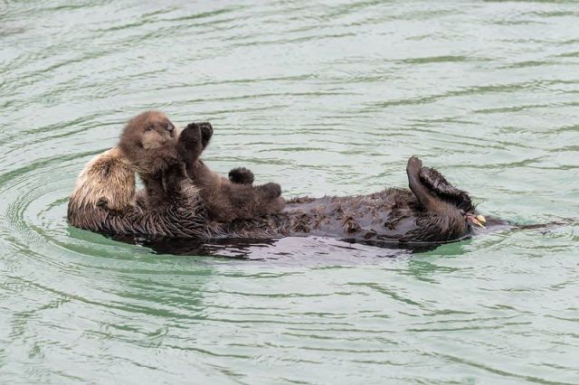 mommy-and-baby-parenting-otter-wild-zoo_2