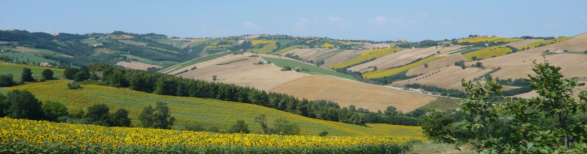 Landscape of the Marches
