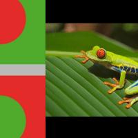 La armonía de los colores complementarios en la naturaleza
