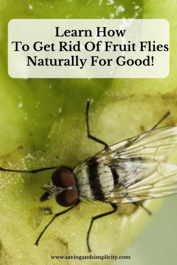learn how to get rid of fruit flies naturally