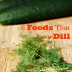 6 Foods That Love Dill