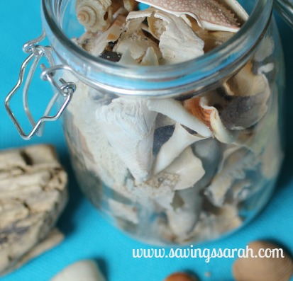Sea Shell Decorations Close Up