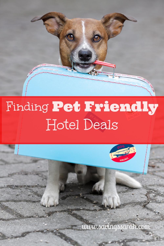 pet friendly deals
