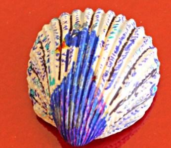 Peacock Sea Shell