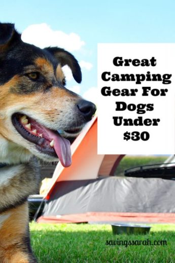 Great Camping Gear for Dogs Under $30
