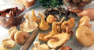 razne vrste gljiva
