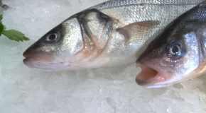 Kuharski savjeti: Riba