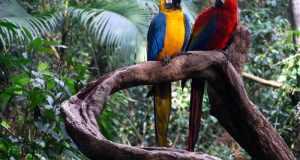 Amazonska prašuma, najveća i najstarija biljna formacija