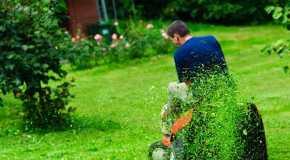 Savjeti za sadnju biljaka