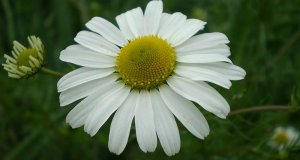 Što je floriterapija