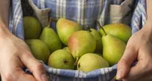 čuvanje voća i povrća