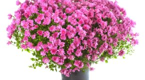 Kako ukrasiti posude za cvijeće
