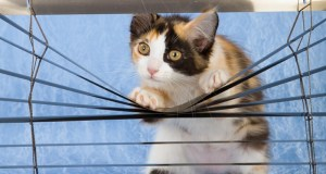 mačka na prozoru