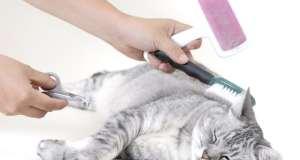 uređivanje mačke
