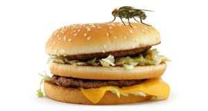 muha na hrani