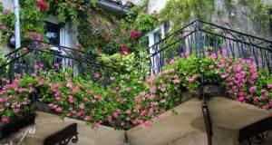 Savjeti za cvijeće i zelenilo na balkonu i prozoru