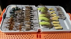 mouches plécopteres