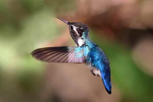 Un Colibri - quel rapport entre un colibri et des savons ? - Savons naturels - Savonnerie du Colibri - Arlon, à la frontière entre la Belgique, la France et le Luxembourg