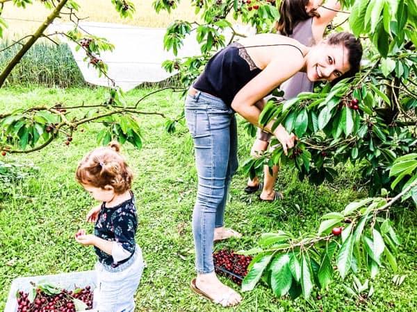 woman picking cherries
