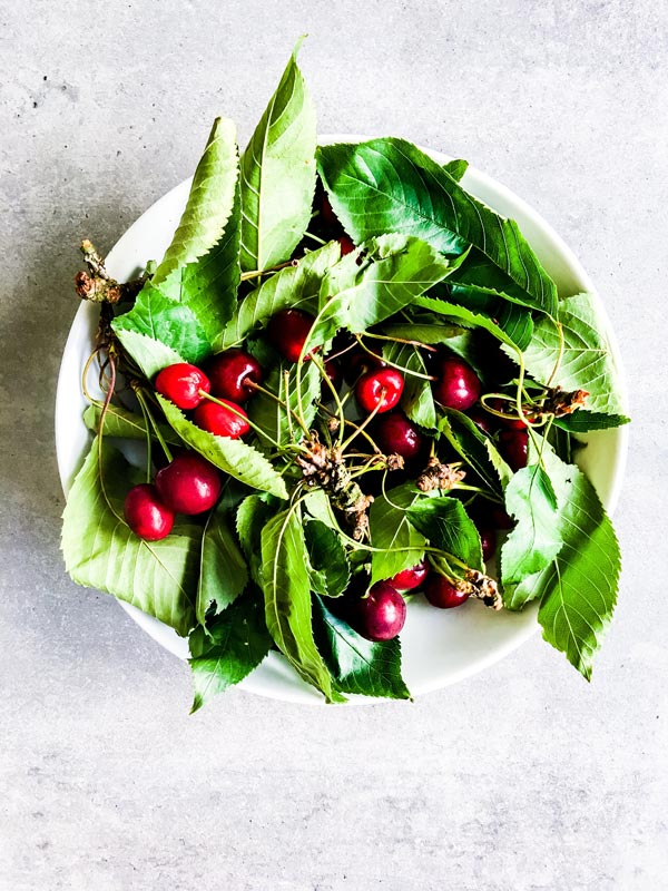 bowl of fresh cherries and cherry tree leaves