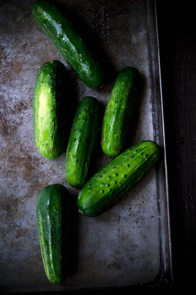 overhead shot of cucumbers on a sheet pan