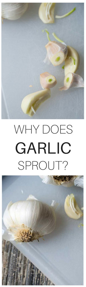 Why does garlic sprout? Find out why!