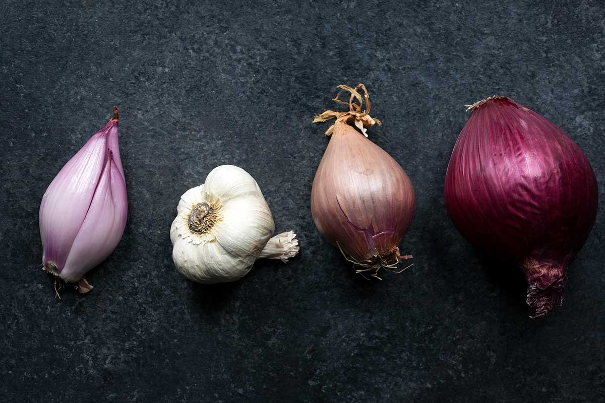 Shallots, a head of garlic, and a red onion lined up in a row