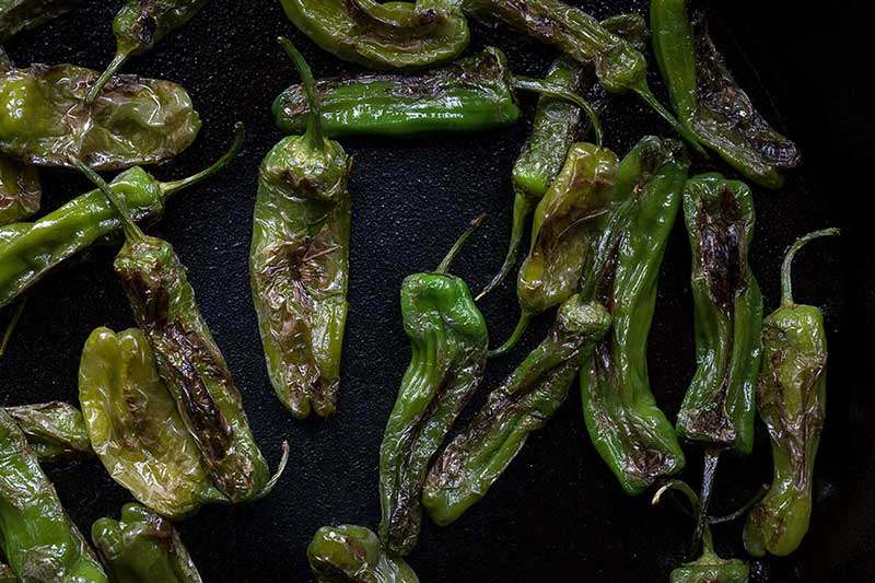 close up photo of blistered shishito peppers in a cast iron skillet