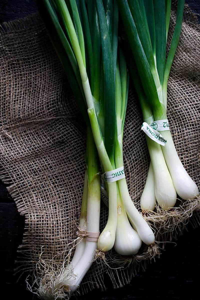 A photo of spring onions on burlap.