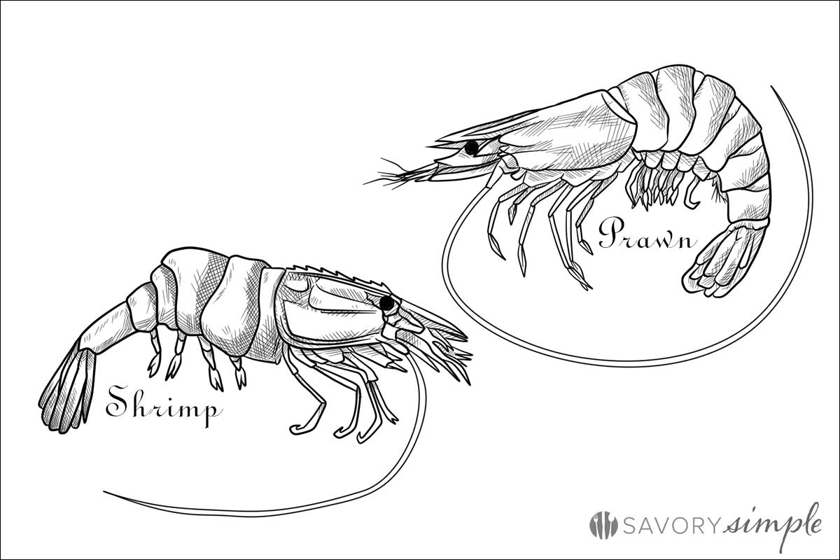 Shrimp vs Prawn Illustration