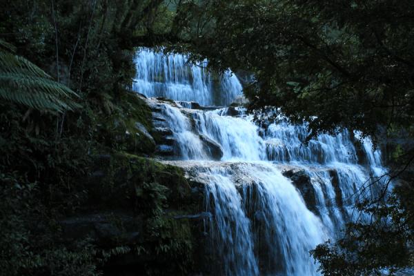 liffey falls tasmanie