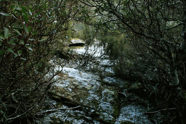 neige tasmanie
