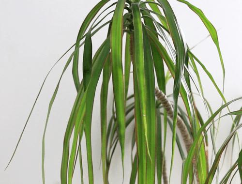 plantes vertes pour décorer intérieur