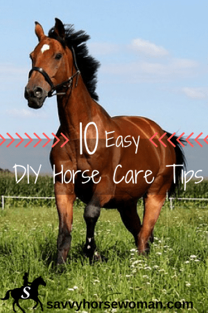 Easy DIY Horse Care Tips from Savvy Horsewoman