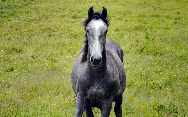 DIY Natural Horse Shampoo Recipe (for Riders too!) by Savvy Horsewoman