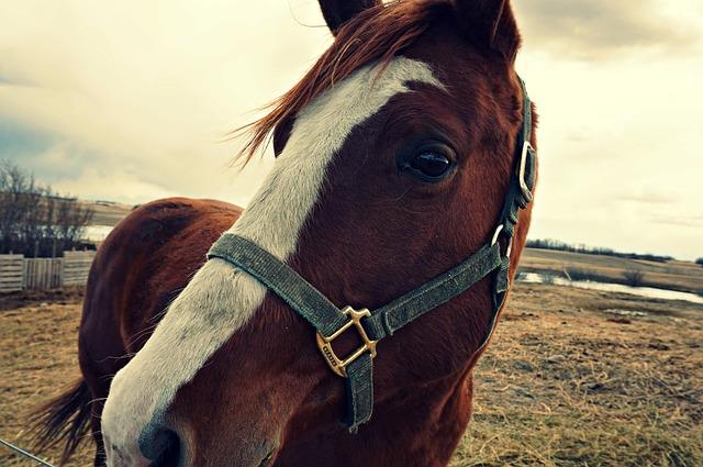 What You Should Know Before Buying a Horse   Horse Shopping   Savvy Horsewoman