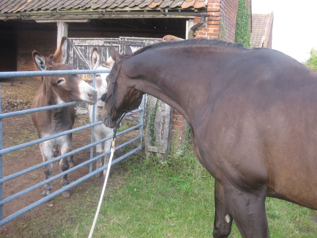 Groundwork for Spooky Horses - Horse Shying Tips