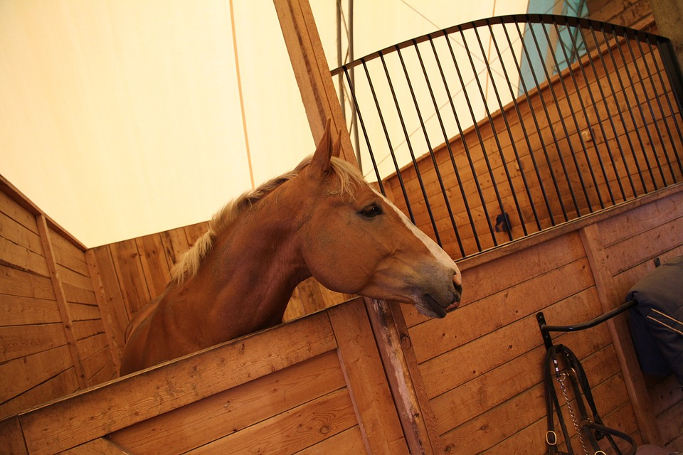 Chia Seeds for Horses - Top 10 Uses | Savvy Horsewoman