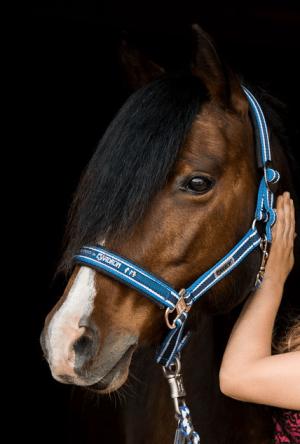 Mane & Tail Growth Recipe | DIY Horse Care | Savvy Horsewoman