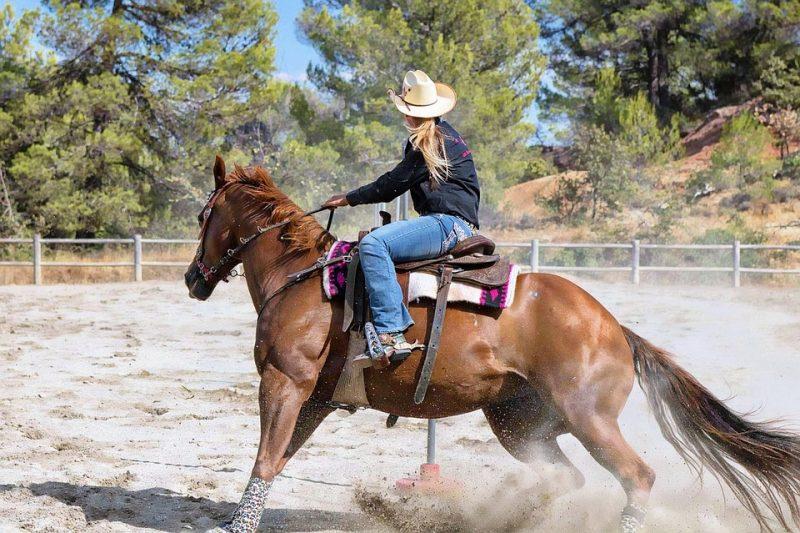 American Quarter Horse - Common Horse Breeds in America