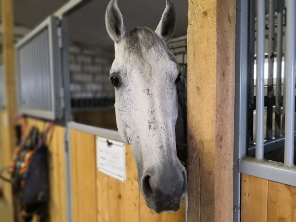 How To Afford a Horse on a Budget with Savvy Horsewoman