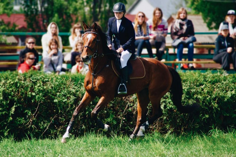 Buying an Ex-Racehorse - Pros & Cons