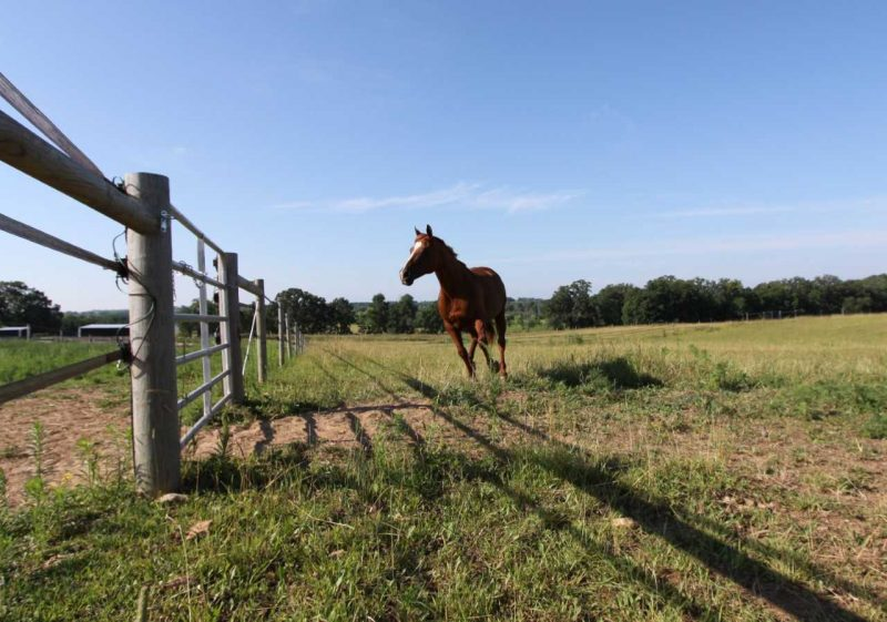 The Anxious Horse - 8 Things to Understand About Horse Anxiety - Savvy Horsewoman
