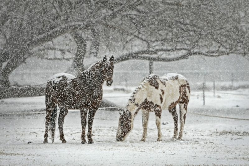 Top 5 Cold Weather Hazards for Horses